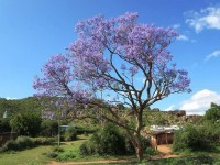 Tips on Keeping Your Garden Trees Healthy During the Summer
