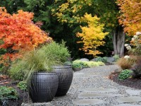 Make Your Backyard Flourish This Autumn