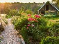 Eco-Friendly Ideas for Your Backyard
