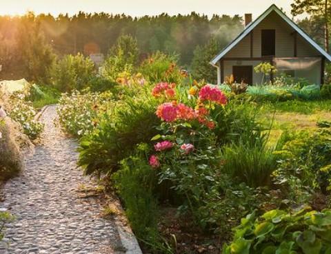 Eco-Friendly Ideas for Your Backyard