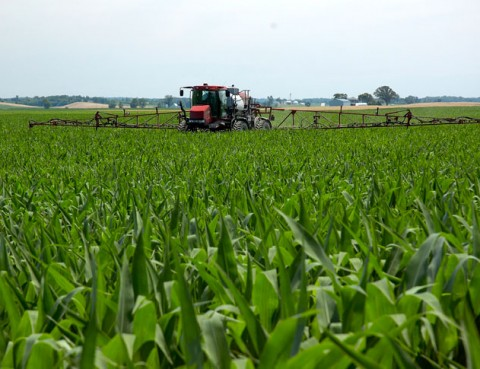 The Pros And Cons Of Using Roundup Ready Crops