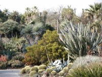 Low Maintenance Drought-Tolerant Gardening