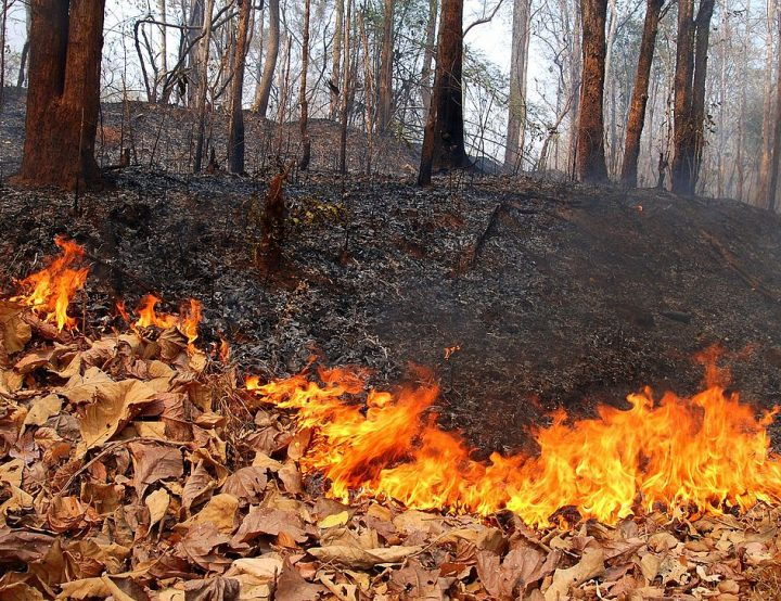 4 Forest Fire Effects and Sustainable Solutions